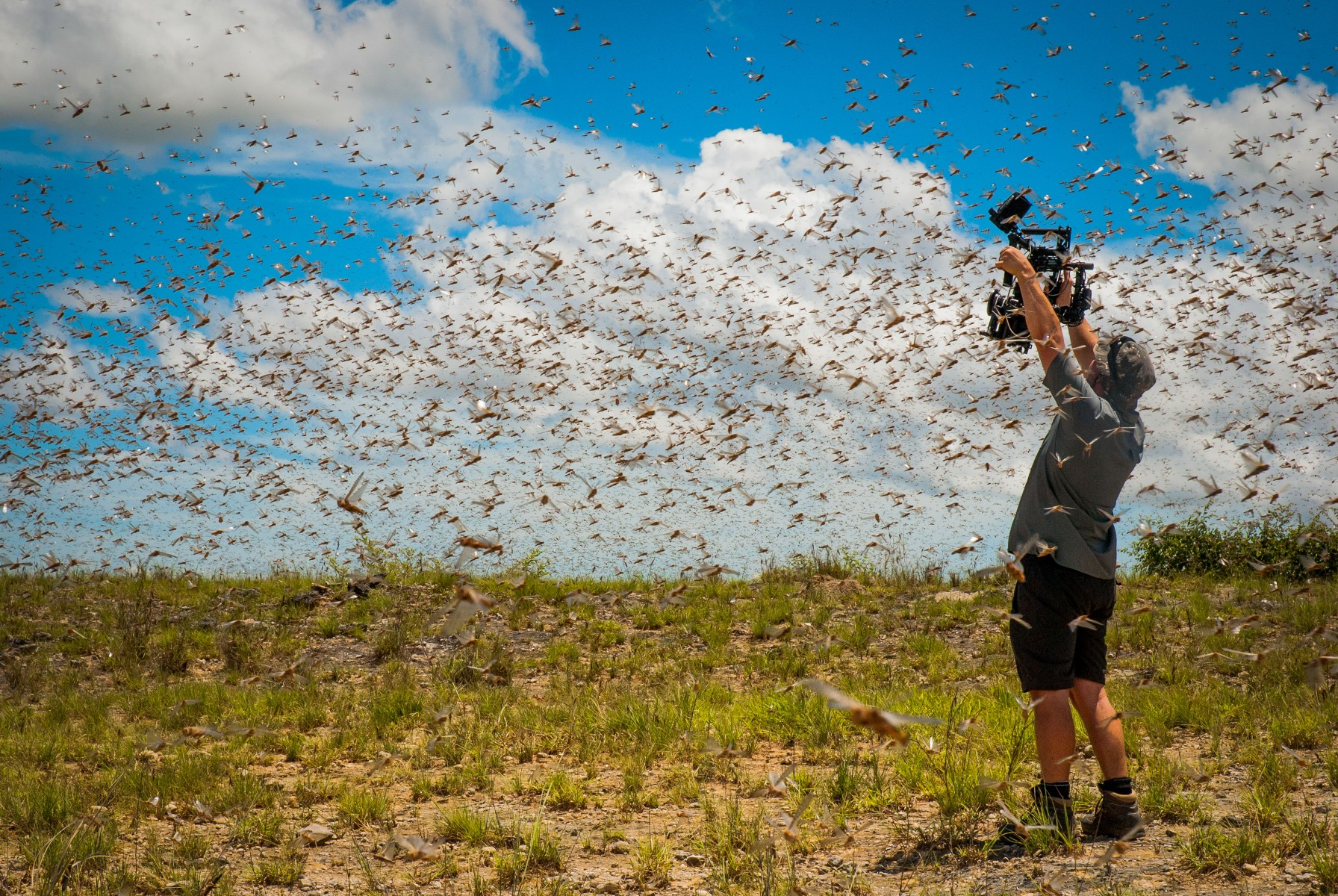 Mitten in einem Superschwarm von Grashüpfern: Kameramann Rob Drewett (Copyright Ed Charles 2016 & polyband)