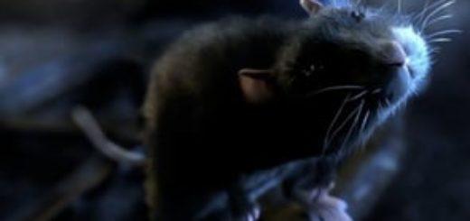 """Fantastischer Kurzfilm am Montag: """"One Rat Short"""" 2"""